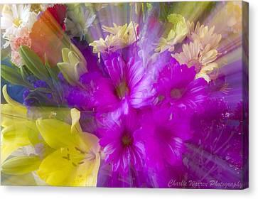 Bloom Zoom Canvas Print by Charles Warren