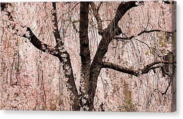 Blossom Rain Canvas Print by Deborah  Crew-Johnson
