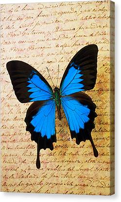 Blue Butterfly On Old Letter Canvas Print by Garry Gay