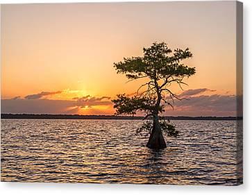 Blue Cypress Lake Sunrise Canvas Print by Claudia Domenig