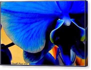 Blue Diamonds Orchids Canvas Print by Danielle  Parent