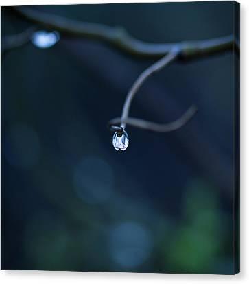 Blue Drop Canvas Print by Photography by Gordana Adamovic Mladenovic