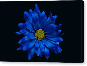 Blue Flower Canvas Print by Ron Smith