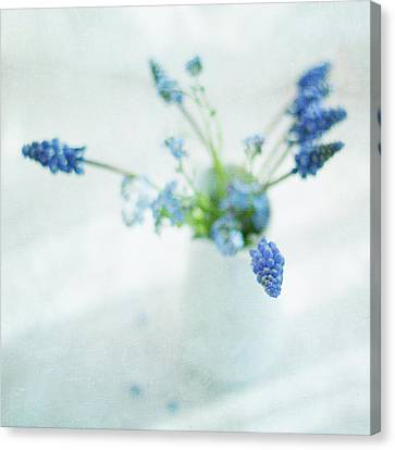 Blue Flowers In White Jug Canvas Print by Jill Ferry