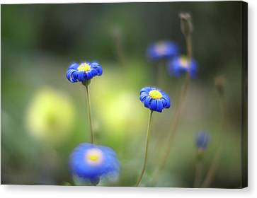 Blue Flowers Canvas Print by Myu-myu