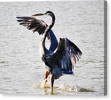 Blue Heron Canvas Print by Paulette Thomas