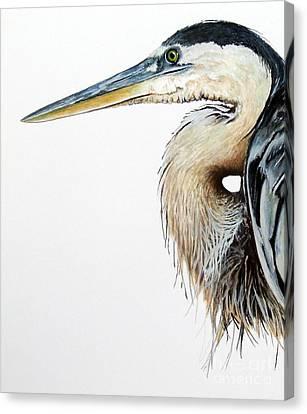 Blue Heron Study Canvas Print by Greg and Linda Halom