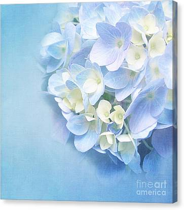 Blue Hydrangea Canvas Print by VIAINA Visual Artist