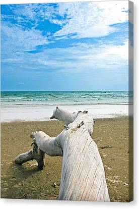 Blue Sea And Sky With Log On The Beach Canvas Print by Nawarat Namphon