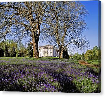 Bluebells In The Pleasure Grounds, Emo Canvas Print by The Irish Image Collection