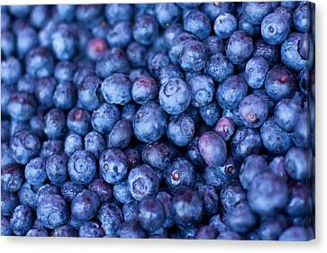 Blueberries Canvas Print by Tanya Harrison