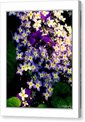 Bluets And Violets Canvas Print by Diana  Tyson
