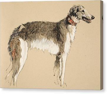 Borzoi Canvas Print by Cecil Charles Windsor Aldin