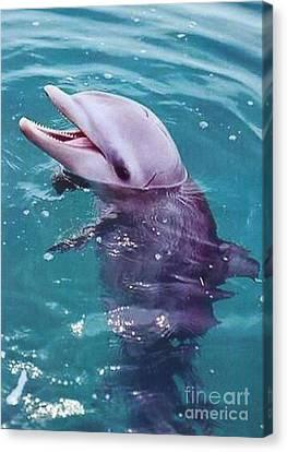 Bottle Nosed Dolphin Canvas Print by Diane Kurtz