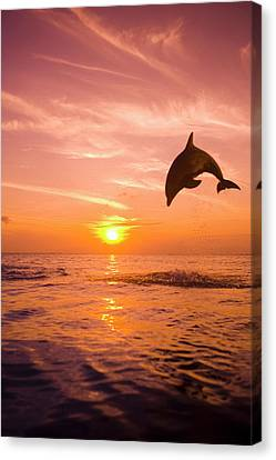 Bottlenose Dolphin (tursiops Truncatus) Jumping Out Of Water, Sunset Canvas Print by Rene Frederick