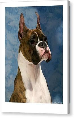 Boxer 456 Canvas Print by Larry Matthews
