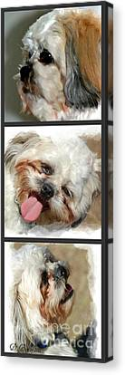 Brady Canvas Print by Donna Bentley