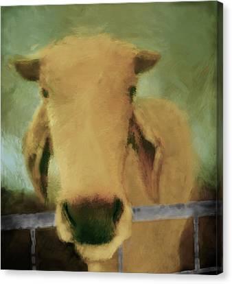 Brahma Cow Greeting Canvas Print by Ann Powell