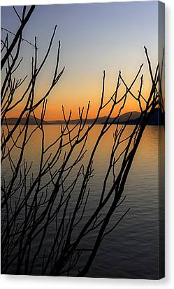 Branches In The Sunset Canvas Print by Joana Kruse