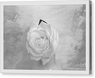 Bridal White Rose Canvas Print by Marsha Heiken