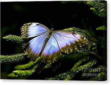 Bright Blue  Canvas Print by Leslie Leda