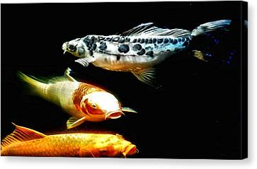 Bright Colored Fish Canvas Print by Don Mann