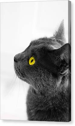 Bright Eyes Canvas Print by Vincent  Dale