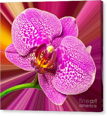 Bright Orchid Canvas Print by Michael Waters