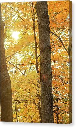 Bright Yellow Canvas Print by Scott Hovind