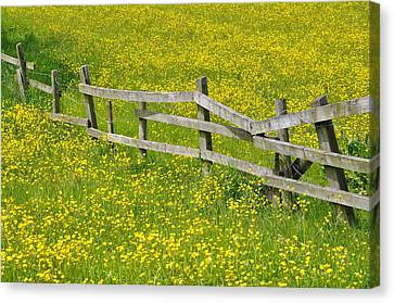 Broken Fence And Buttercup Field Canvas Print by Photos by R A Kearton