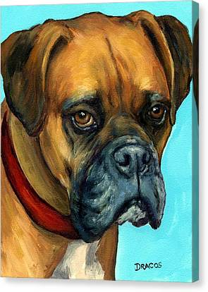 Brown Boxer On Turquoise Canvas Print by Dottie Dracos