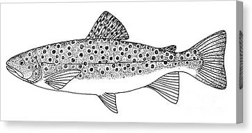 Brown Trout Canvas Print by Granger