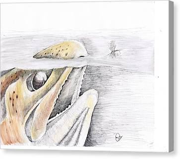 Brown Trout  Canvas Print by H C Denney