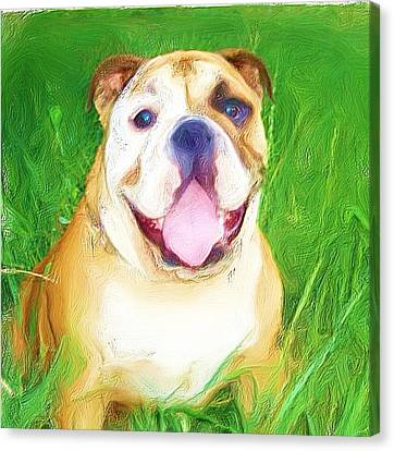 Bulldog Canvas Print by Ritmo Boxer Designs