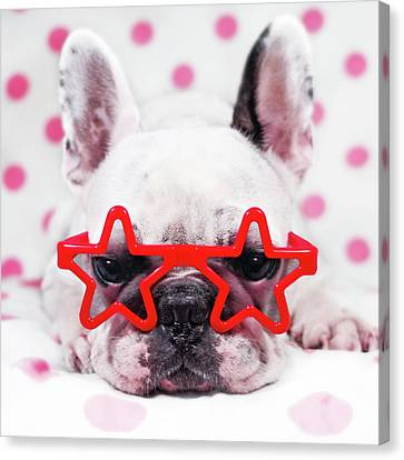 Bulldog With Star Glasses Canvas Print by Retales Botijero