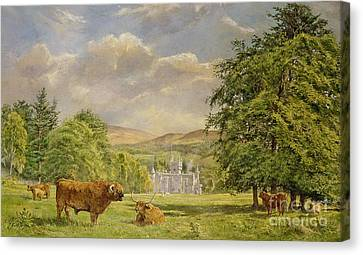 Bulls At Balmoral Canvas Print by Tim Scott Bolton