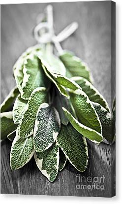 Bunch Of Fresh Sage Canvas Print by Elena Elisseeva