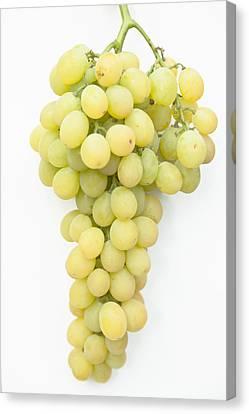 Bunch Of Grapes Canvas Print by Maj Seda