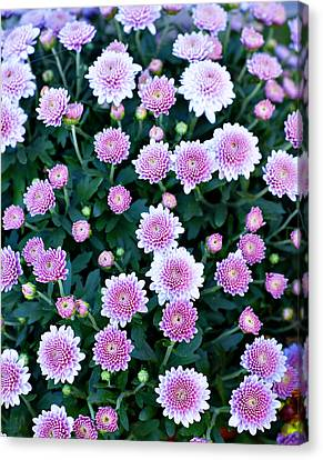 Bunch Of Pink Canvas Print by Malania Hammer
