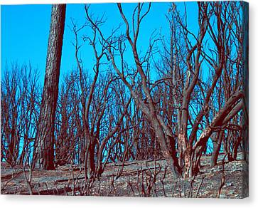 Burned Trees And The Sky Canvas Print by Naxart Studio
