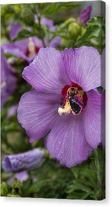 Busy Bee Canvas Print by Peter Chilelli