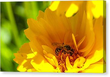 Busy Bee  Canvas Print by Scott McGuire