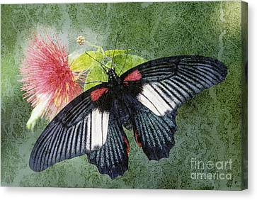 Butterfly And Silktree - Fs000581-a Canvas Print by Daniel Dempster