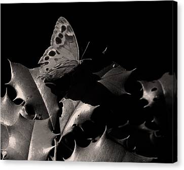 Butterfly Canvas Print by Brian M Lumley