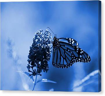 Butterfly In Blue Canvas Print by Angie Tirado