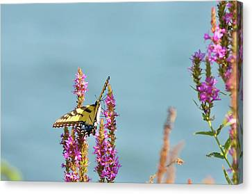 Butterfly Morning Canvas Print by Bill Cannon