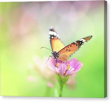 Butterfly Rainbow Canvas Print by Sharon Lapkin