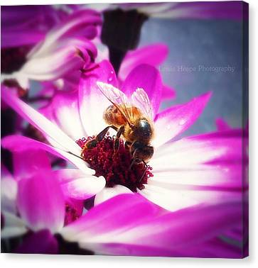Buzz Wee Bees Ll Canvas Print by Lessie Heape