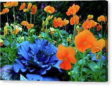 Cabbage And Viola's Canvas Print by Laura  Grisham