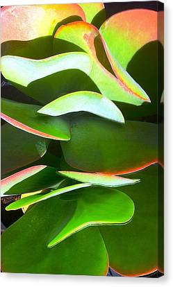 Cactus Wave Canvas Print by Paul Washington